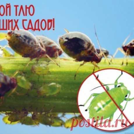 10 хитростей против комаров
