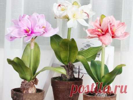 Хотите, чтобы комнатные цветы цвели долго и пышно? Тогда вам нужно пользоваться этой маленькой хитростью — FunnyReps