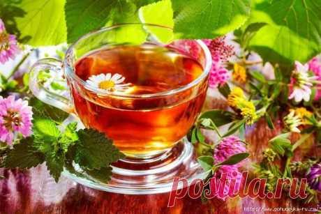 ЗДРАВОТДЕЛ. Пейте чай из клевера!
