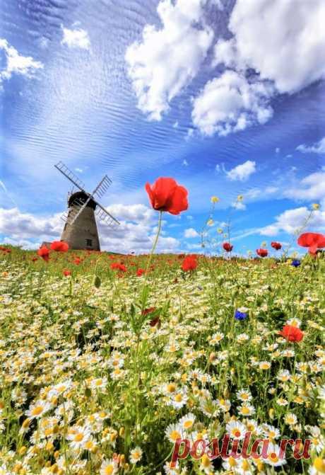 (8) Beautiful World
