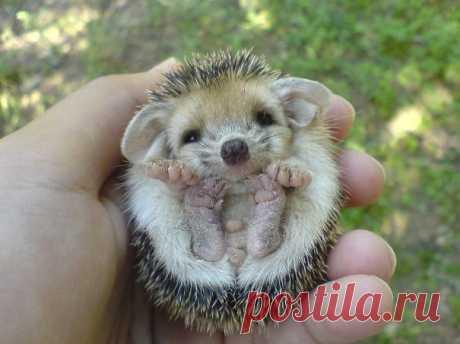 Очаровательные детёныши животных, которые легко помещаются в руках