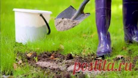 Зола в качестве удобрения Какие ошибки садоводы допускают при использовании золы в качестве удобрения и как их избежать.