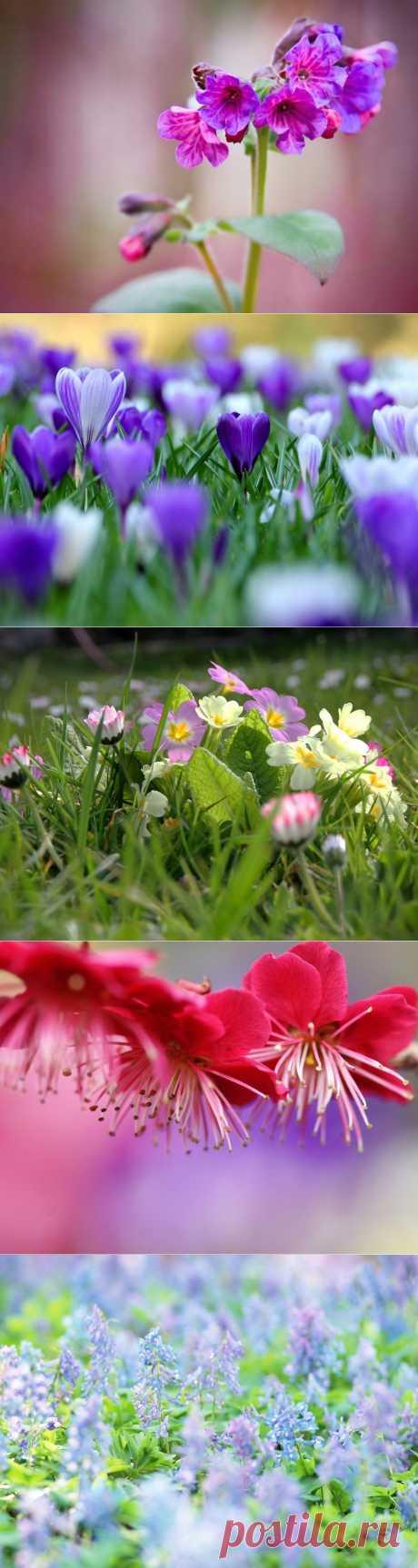 Весна, весна! Как воздух чист!.