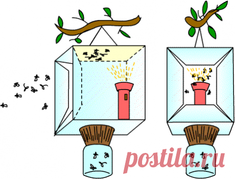 Действенные советы по избавлению от майского жука и его личинок