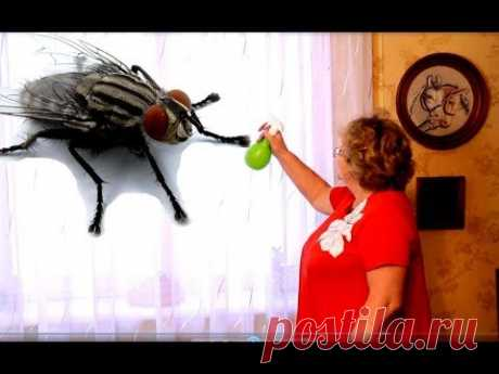 Как избавиться от #мух в #доме навсегда - YouTube