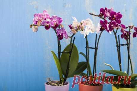 Как пересадить орхидею во время цветения . Милая Я