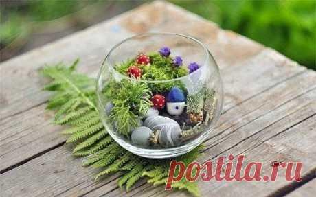 Вечнозеленый маленький мир — Сделай сам, идеи для творчества - DIY Ideas