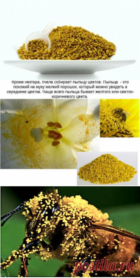 Лечение пыльцой, полезный свойства, как принимать пыльцу