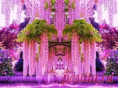 Декоративные  деревья, кустарники, лианы.  Ornamental  trees, shrubs, vines. Plant a tree today!