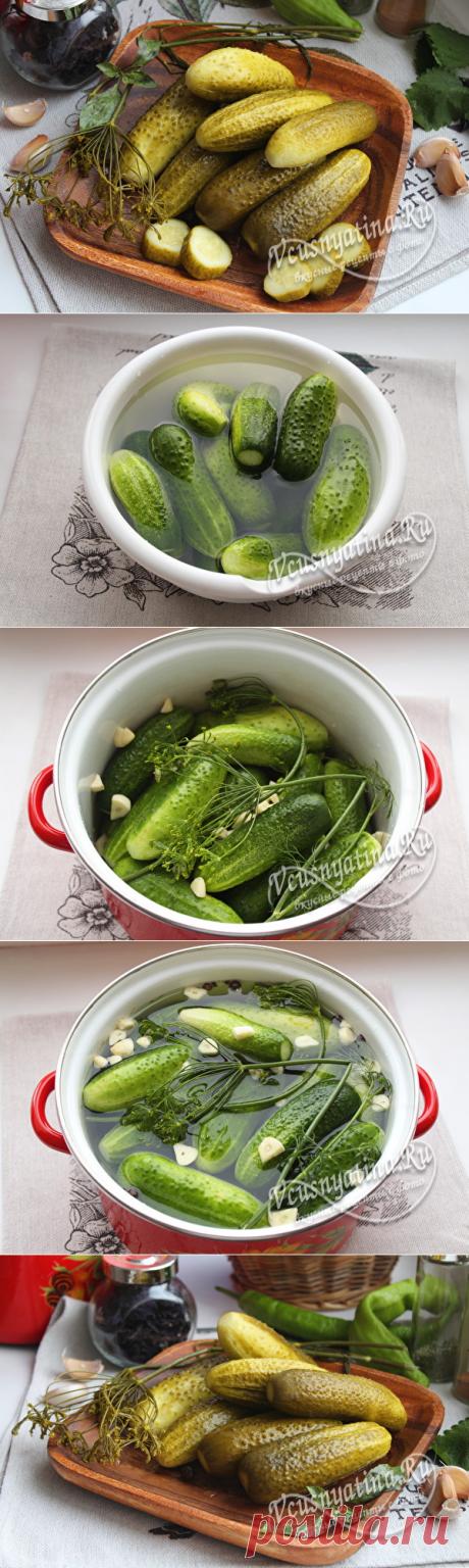 Соленые огурцы в кастрюле: рецепт, холодная засолка, пошаговые фото