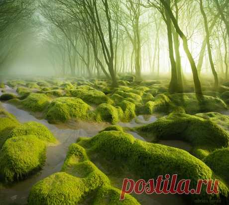 Мистика и загадка в пейзажах Румынии Румыния – не самое популярное направление для туристов. Между тем, кто побывал в этой стране, совершенно ею очарованы. Там и впрямь есть на что посмотреть: сказочные леса, королевские дворцы, величественные горы… За свою богатую средневековую историю Румыния обзавелась множеством красивых замков,...