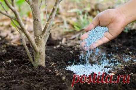 Фосфорные удобрения – залог богатого урожая  Подкормки фосфором необходимы всем растениям без исключения. Несмотря на то, что они не вызывают такого сногсшибательного эффекта, как азотные, фосфорные ненавязчиво повышают урожайность, притом не т…