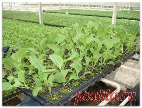 Выращивание рассады: 8 проблем и их решения