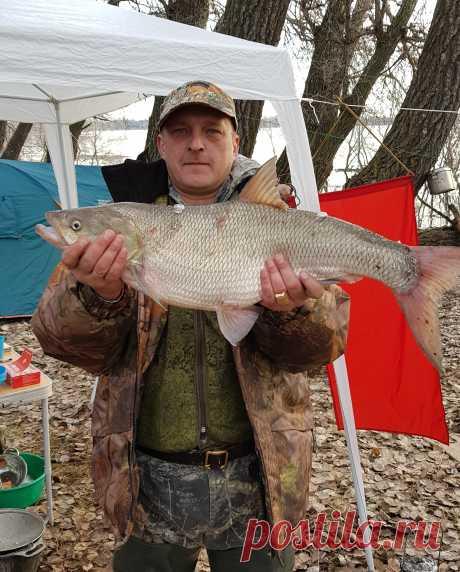 Здесь фотографии мои рыбалок с друзьями на Волге и Ахтубе
