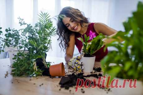 Всего 7 приемов, чтобы комнатные цветы росли как на дрожжах | Идеальный огород | Яндекс Дзен