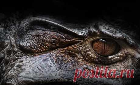 Рептилия из ада: как выглядит самый большой крокодил в мире