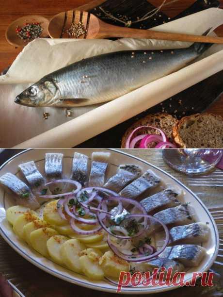 на столе: рецепты засолки, варианты подачи и оригинальные блюда   АиФ Кухня