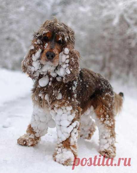 15 животных, которые впервые видят снег
