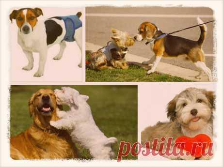 Как помочь собаке во время течки: советы и рекомендации заводчику