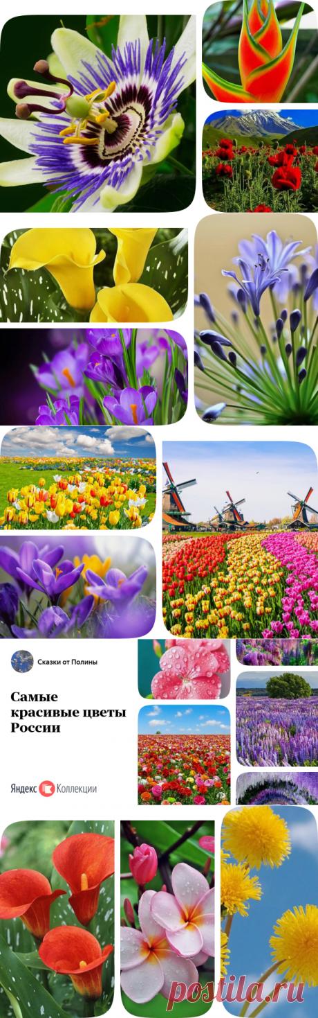 31 карточка в коллекции «Самые красивые цветы России» пользователя Сказки от Полины в Яндекс.Коллекциях