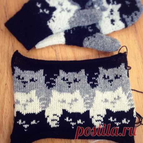 """Sachiko Burgin ち в Instagram: «Kitten stripes! I've got the mitts, now for a sweater. (After all, it was my backpack that inspired #BarbaraGregory to design """"Moggies""""). #twistcollective #machineknitting #knitting #knitstagram»"""