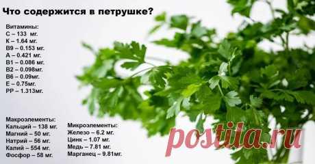 Как влияет петрушка на организм? | Домадил - DomaDeaL.Ru | Яндекс Дзен