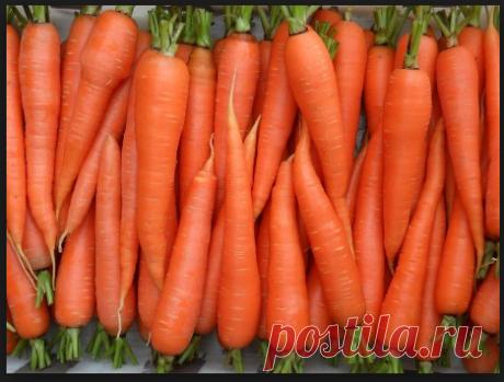 Старинный, дедовский способ посадки моркови. Урожай возрастет в два раза   Морковь является ценным источником витамина А и многих минералов. Нормализует обмен веществ в организме, да и просто является неотъемлемым компонентом нашего рациона. Как только прогреется почва, по…