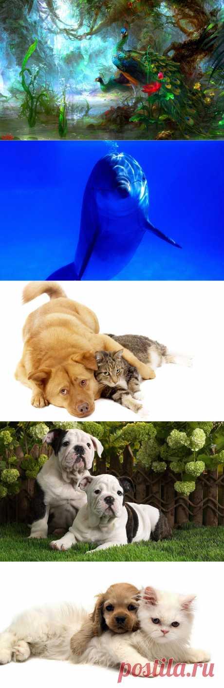 Обои на рабочий стол - Животные.