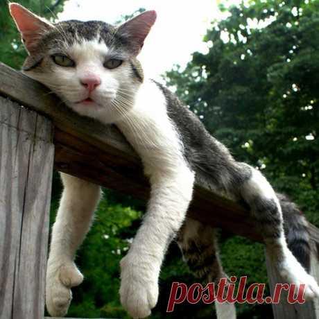 Котэ отдыхает | Cat-Tube