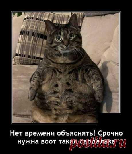 Демотиваторы - 18 картинок - Нет скуки - Сайт хорошего настроения