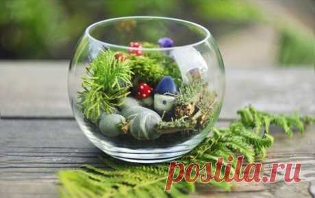 Вечнозеленый маленький мир