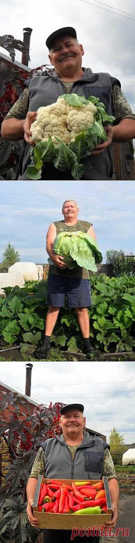 Вкусный Огород: Сроки посева овощей
