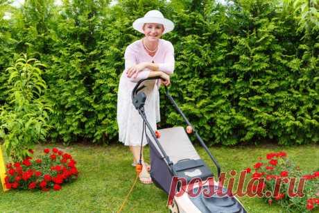 Как правильно ухаживать за газоном | 6 соток