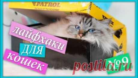 Лайфхаки для кошек и котов
