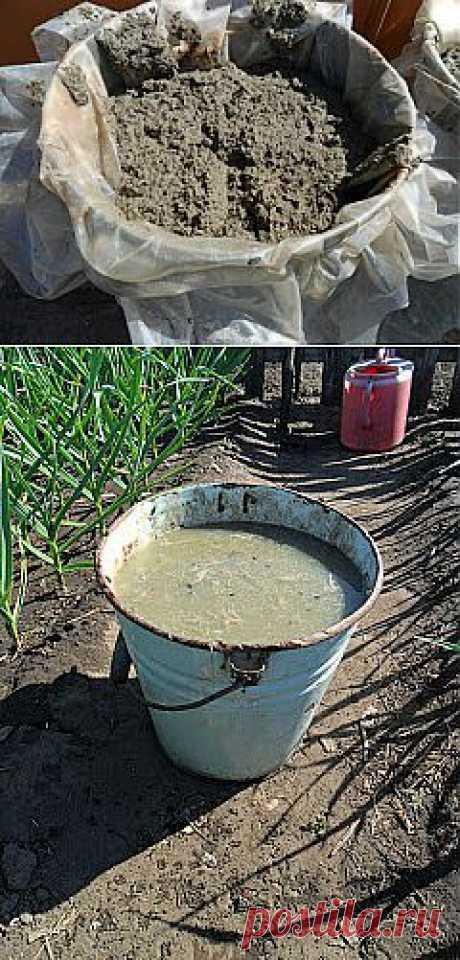 Как я использую куриный помет на огороде?  Куриный помет я использую как перепревший - пролежавший под открытым небом несколько лет, так и свежий - имеющий в натуральном виде полужидкую консистенцию.