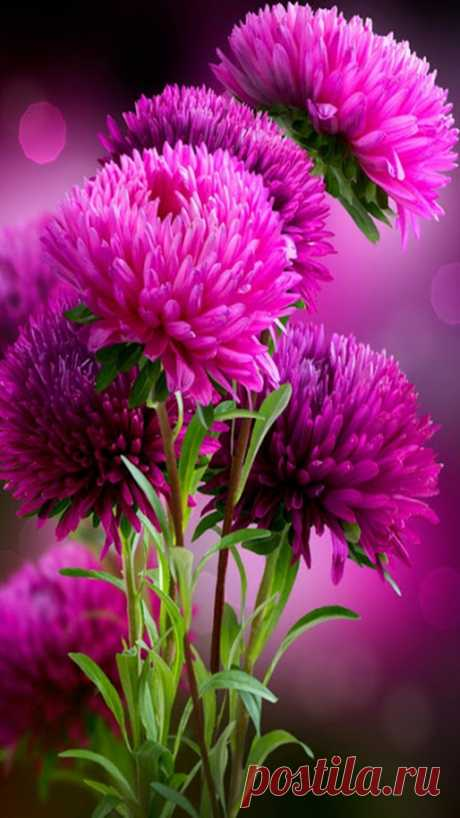 Hd Wallpapers Of Flowers For Mobile - Low Onvacations Wallpaper Image