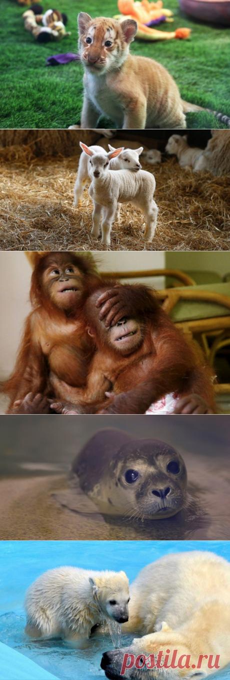 10 фотографий удивительно милых и забавных животных-малышей