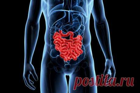 Заболевания тонкого кишечника и симптомы | 120/80 | Яндекс Дзен