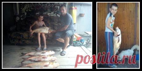 Рыбный Блог Как я пытался поймать большого толстолобика pic В 15 км от моего дома есть озера. Места для рыбалки там – прекрасные. Я несколько лет ездил туда на толстолобика. Рассказывали, что в этих озерах водятся особи весом 5-10 кг. И некоторым счастливчикам иногда удается их поймать.  Конечно, я тоже мечтал вытащить увесистую рыбу, но почему-то чаще мне попадались экземпляры по 1-2 кг. Да и то, далеко не всегда. Бывало, возвращался домой совсем без улова.