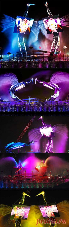 Джереми Рейлтон: танцующие журавли « Крутая тема: самые интересные фото, видео, вещи и явления со всего света