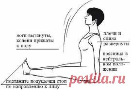 Жесткие подколенные сухожилия - ловушка для спины. При правильных наклонах вперед сгибание происходит в тазобедренных суставах, а не в других частях тела (в пояснице или в коленях). При этом на всех этапах движения сохраняются форма и длина спины. У таких наклонов существует много преимуществ: ничто не угрожает межпозвоночным дискам, не...
