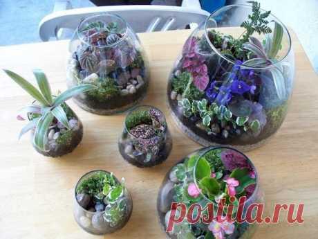 Сад в миниатюре — террариумы  Террариум для растений — это любой стеклянный или пластиковый прозрачный контейнер. Террариумы — это прекрасная возможность выращивания комнатных растений, требующих особого ухода. Для таких террариу…