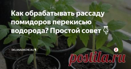 Как обрабатывать рассаду помидоров перекисью водорода? Простой совет👇 Каждый год мы с женой выращиваем большое количество рассады (для себя и на продажу). Наши кустики выгодно отличаются от соседских тем, что растут всегда крепкими и коренастыми. Секрет выращивания качественной рассады прост, мы ее обрабатываем перекисью водорода. Она укрепляет растения, предохраняет от болезней и вредителей. Кроме обработки рассады пероксид успешно применяем для обработки почвы, чт