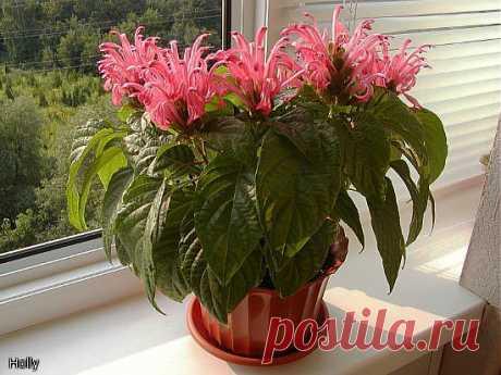 Пять натуральных удобрений для домашних цветов!.