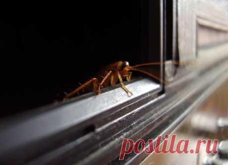 Народные средства избавления от тараканов.