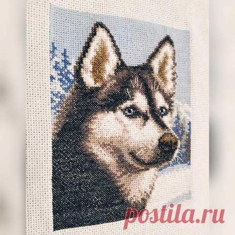 Вышивка крестом - Хаски :: Онлайн мастерская вышивки крестом easycross.ru