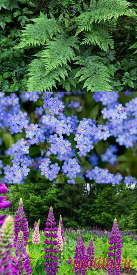 Какие лесные цветы могут стать гордостью вашей клумбы