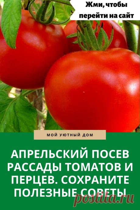 Полезные советы о рассаде, которые стоит знать каждому садоводу
