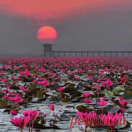 Закат над озером лотосов