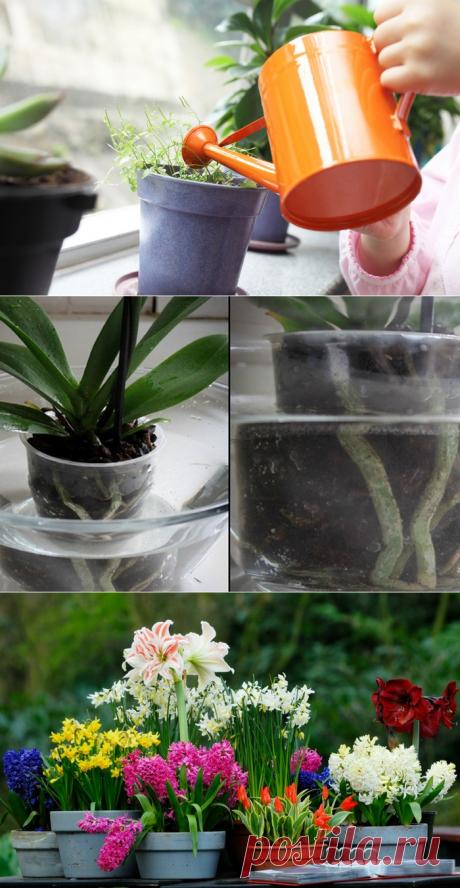 Зелёный дом: 5 советов по уходу за комнатными растениями